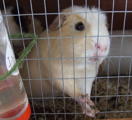ginger pig says: o hai
