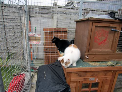 cats on rabbit hutch