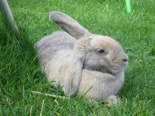 obligatory cute bunny pic