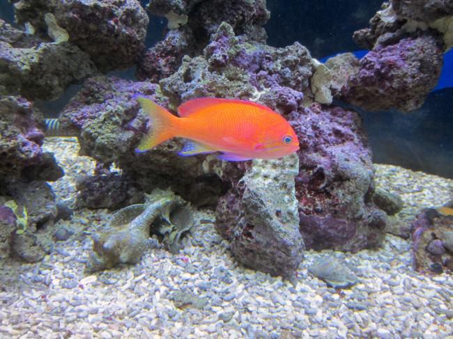neon-fish_mini