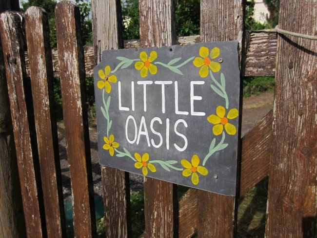 little oasis pandy