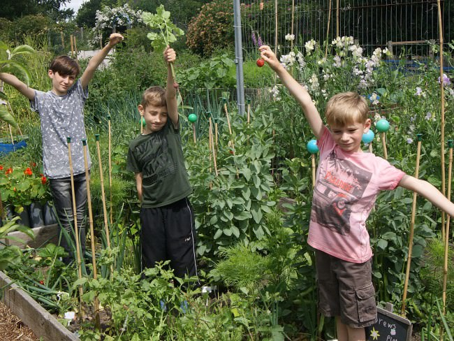 Rachael's boys on the allotment