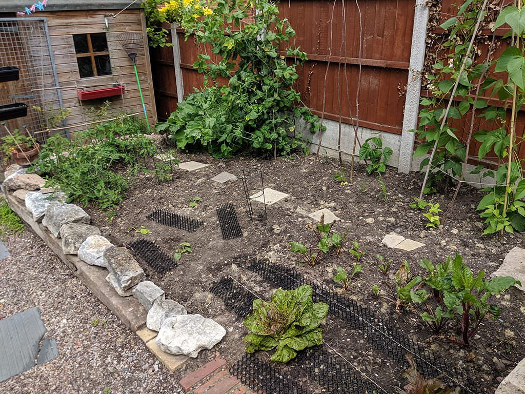overview of veg garden with plastic cat deterrent strips and conical plant supports